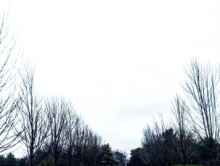 winter_yarra_valley_8