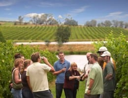Australian Wine Tours in Victoria's Yarra Valley