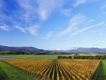 Enjoy the view on your private tour to the Yarra Valley