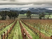 winter_yarra_valley_1
