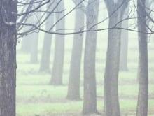 winter_yarra_valley_6