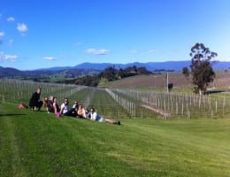 Social tours to the Yarra Valley with lunch