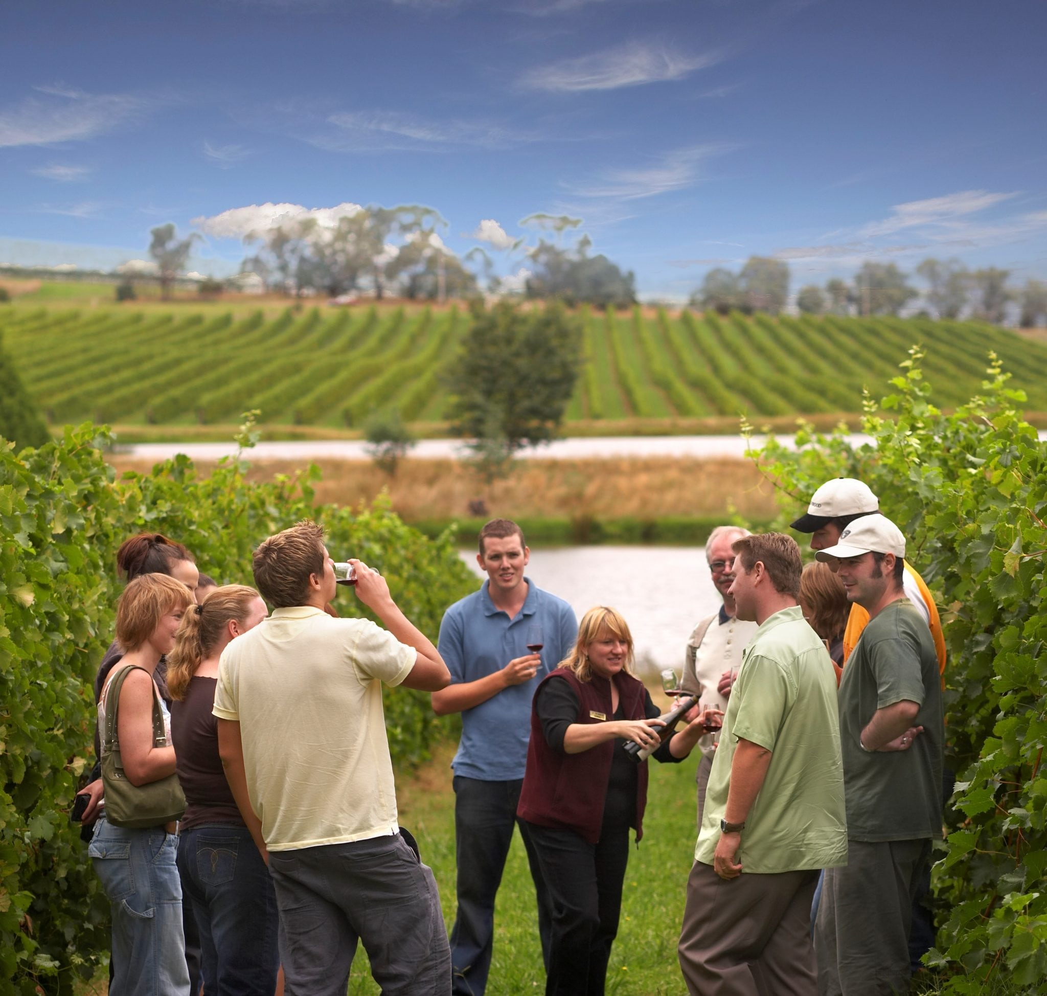 Australian group Wine Tours in Victoria's Yarra Valley