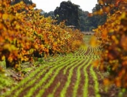 Image of a Best's Great Western vineyard in autumn