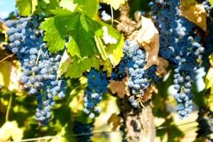 yf-grapes