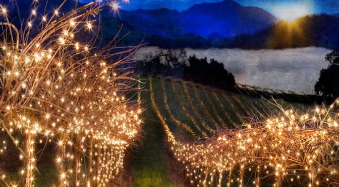 Temecula Valley Vineyard covered in fairy lights