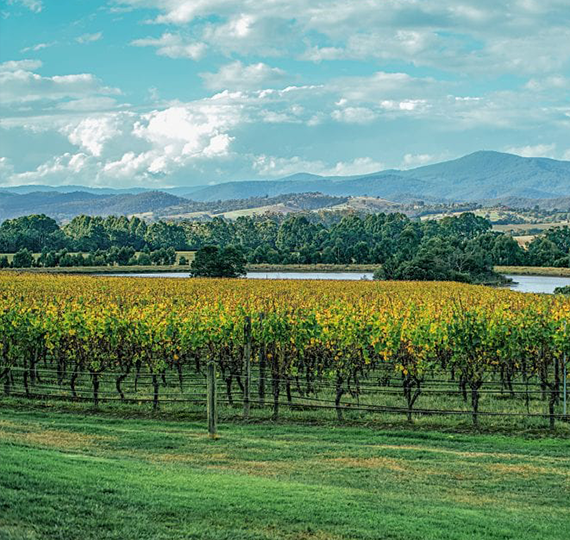 Our Yarra Valley wine tours take in some spectacular scenery